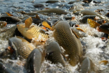 Три озера в Башкирии отданы в частные руки для рыбоводства