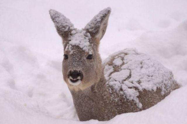 МВД уточнит понятие «крупного ущерба» в статье УК о незаконной охоте