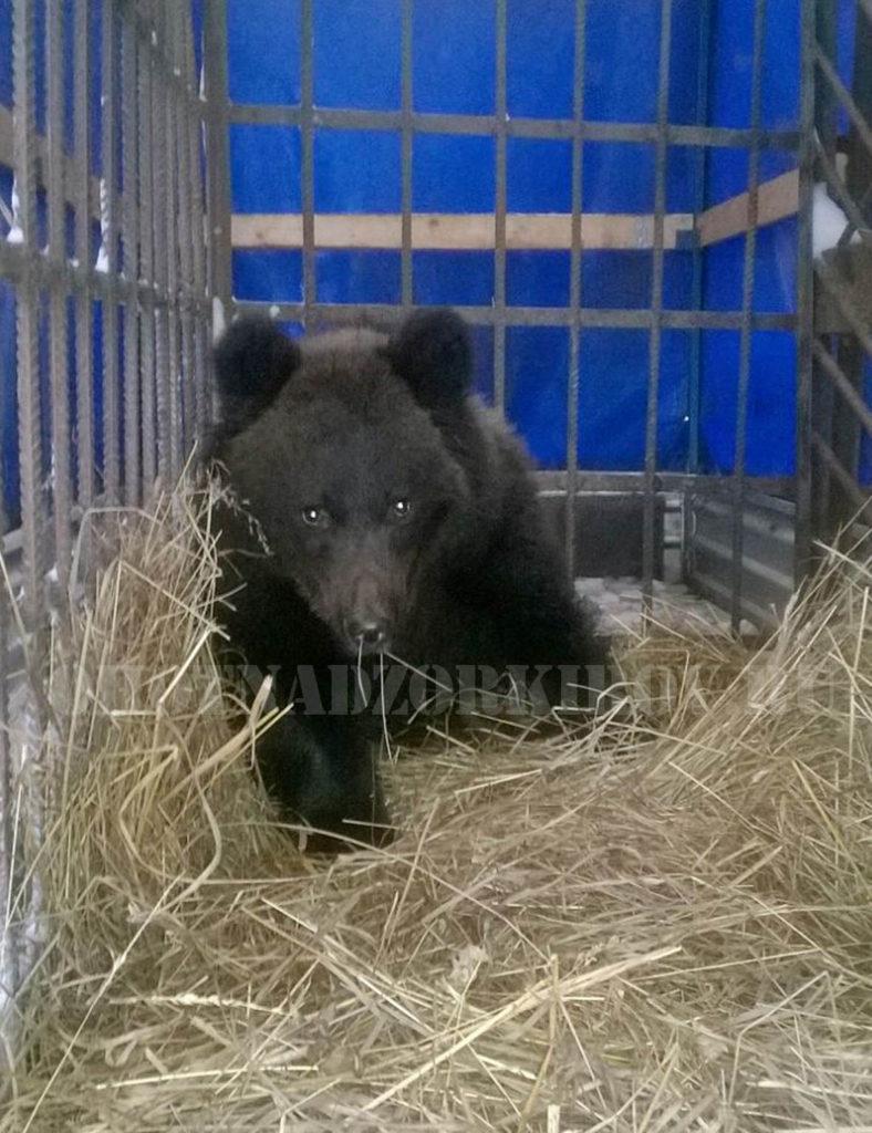 Маленький «символ России» спасен в Кировской области