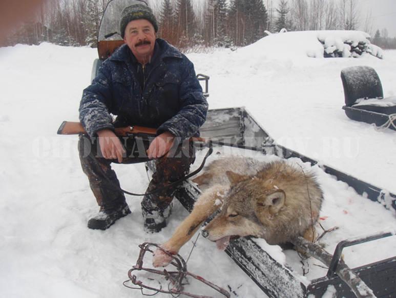 С начало 2017 года В кировской области добыто 10 волков