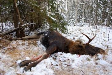 В Рязанской области браконьера взяли с поличным