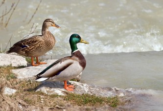В Марий-Эл весеннюю охоту 2017 перенесут на неделю