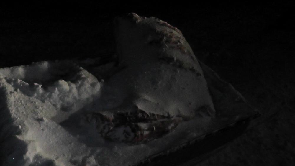 На территории Пензенской области выявлена незаконная добыча лосей