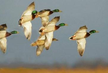 Весенняя охота — 2018: Смоленская область планирует сроки