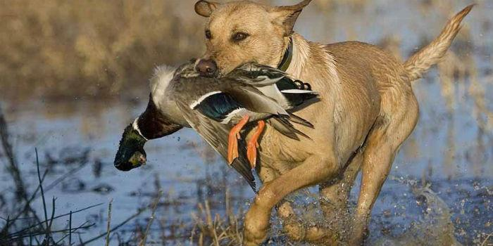 Открытие весенней охоты 2017 в Архангельской области