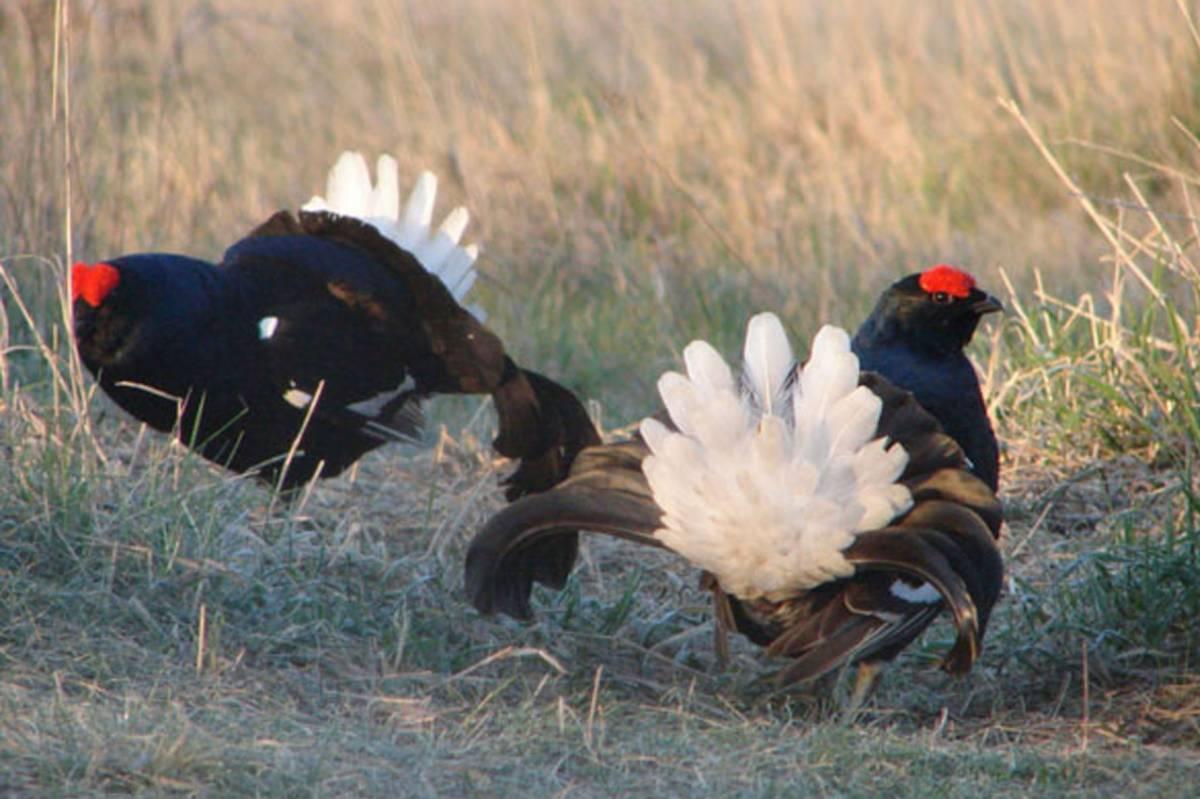 Сроки весенней охоты 2017 в Вологодской области