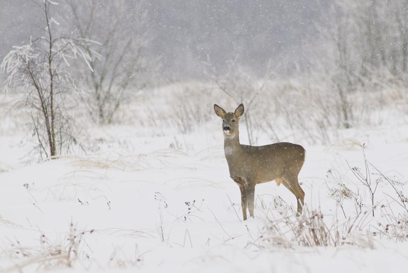 Два факта браконьерства выявлено за неделю в Саратовской области