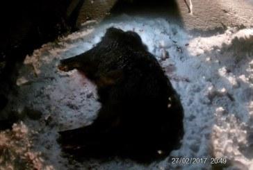За незаконную охоту сбежавшего браконьера достали из дома