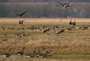 Весенняя охота 2018: Татарстан не меняет сроки открытия