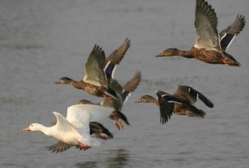 В ряде угодий Волгоградской области запрещена весенняя охота
