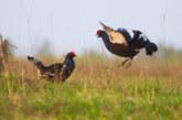 Определены сроки весеннего сезона охоты в Смоленской области