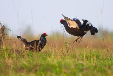 В Тюменской области установлены ограничения весенней охоты