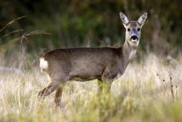 В Саратовской области задержали семью браконьеров
