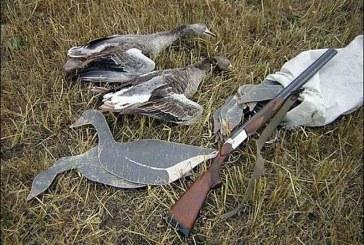 Определены сроки весенней охоты 2017 в Сахалинской области
