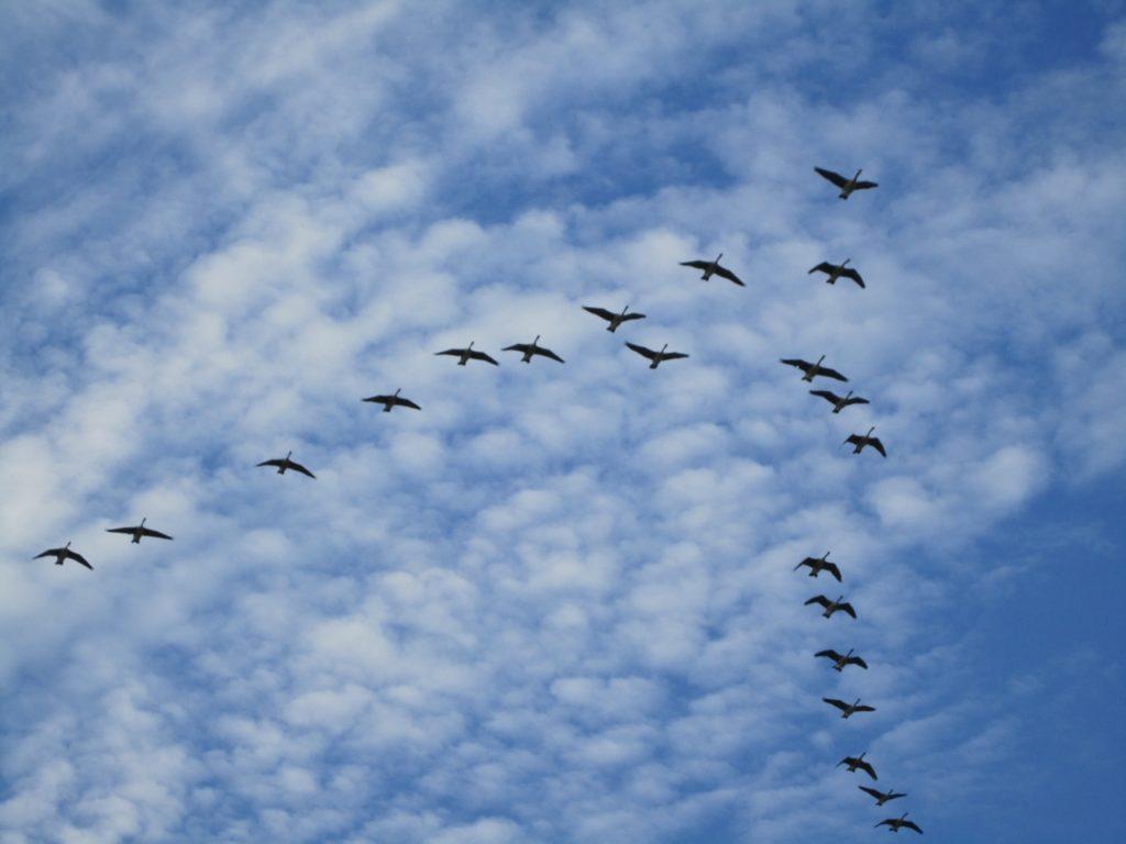 О сроках весенней охоты 2017 в Удмуртии