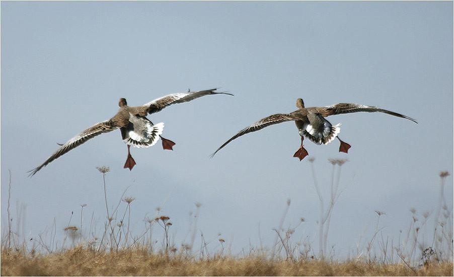 Весенняя охота — 2018: Сроки открытия в Саратовской области остаются прежними