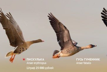 Открытие и сроки весенней охоты 2017 в Амурской области