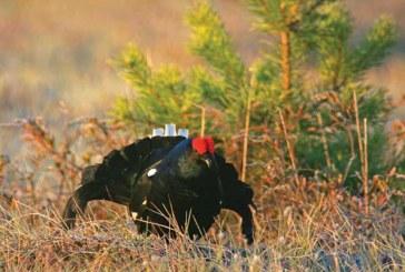 Весенняя охота 2017 в Оренбургской области