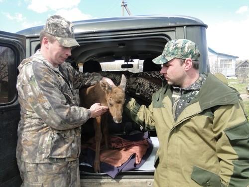 Жители регионов спасают диких животных