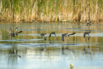 Осенняя охота 2017 во Владимирской области