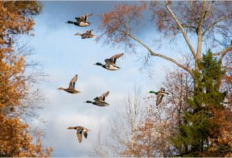 Осенняя охота 2017 в Саратовской области