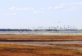 Уникальный маршрут для наблюдений за птицами в Омской области