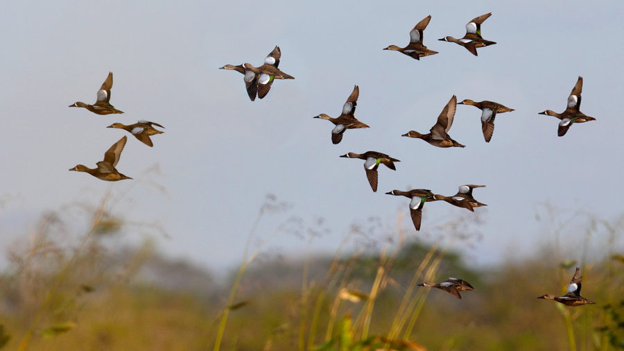 Весенняя охота 2018: изменены сроки открытия в Воронежской области