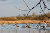 В Башкирии обсуждают запрет весенней охоты 2018