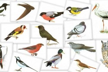 Наука в помощь охотнику — голоса птиц России онлайн
