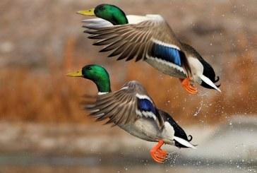 Весенняя охота — 2018: Нижегородская область перенесла сроки открытия