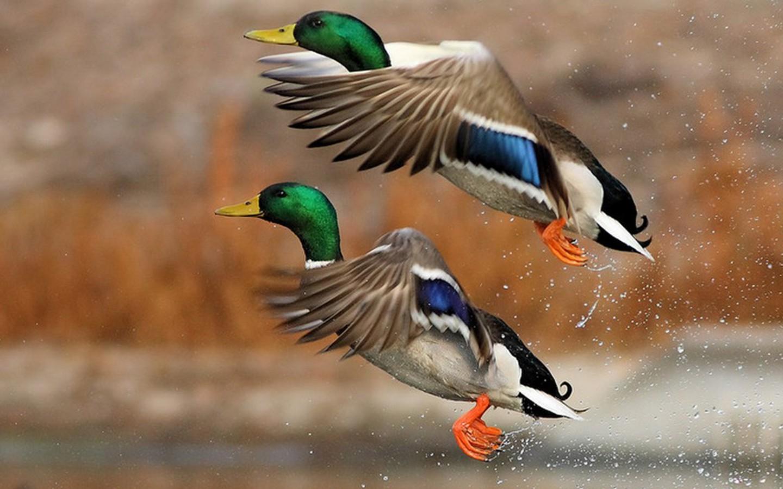 Новые правила и сроки весенней охоты в Кировской области