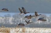 В Тамбовской области определены сроки весенней охоты 2020