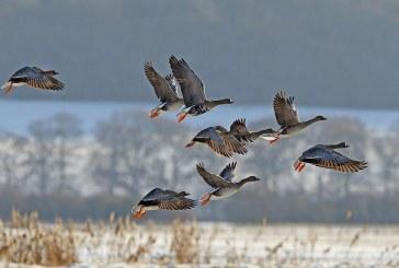 Весенняя охота 2018: Тульская область установила сроки открытия