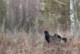 Весенняя охота 2018: Пермский край установил новые сроки