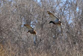 Весенняя охота 2018: Ленинградская область утвердила сроки открытия