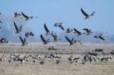 Сроки весенней охоты 2020 в Волгоградской области изменены