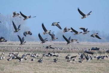 Весенняя охота 2018: Томская область определила сроки сезона
