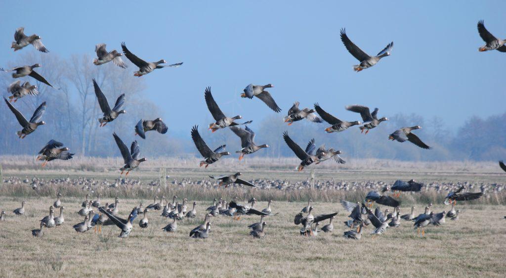 В Оренбуржье определились со сроками весенней охоты в 2021 году