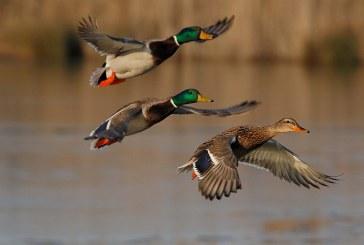 Весенняя охота 2018: В Хабаровском крае утверждены новые сроки