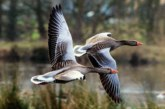 В Калмыкии ввёден запрет весенней охоты