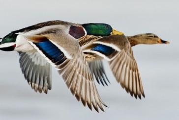Весенняя охота в Саратовской области откроется на неделю раньше