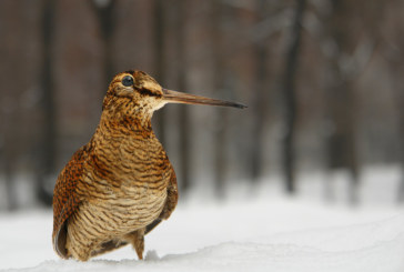 Весенняя охота 2019 в Чувашии
