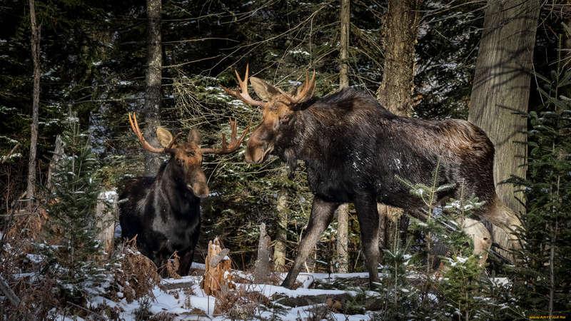Минприроды РФ совершенствует приказы по охоте
